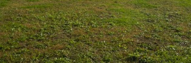 Capaccio Paestum, l'Amministrazione comunale ribadisce l'invito alla pulizia e manutenzione dei terreni