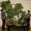 Giugliano in Campania – trovate droga e armi in un appartamento