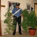 Ducenta: marijuana nascosta in cantina. Un incensurato finisce nei guai