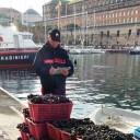Napoli: sicurezza alimentare a ridosso delle festività. Sequestrati dai Carabinieri 360 kg. di prodotti ittici e denunciati 12 venditori abusivi
