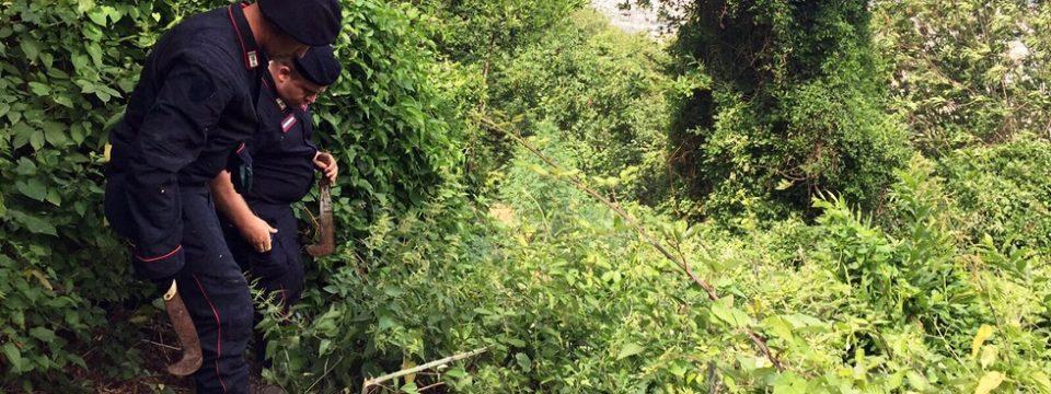Lettere piantagione di cannabis distrutta dai carabinieri for Progetti di piantagione