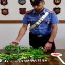Pomigliano d'Arco: servizio antidroga dei carabinieri